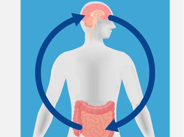 De nouvelles preuves de cet axe intestin-cerveau, de mieux en mieux documenté
