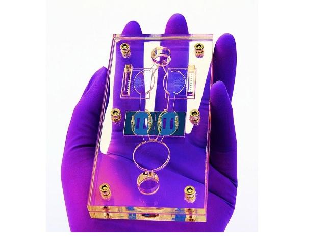 e dispositif avec modules d'interconnexion contenant des cellules de cœur, de foie, de muscle squelettique et de système nerveux d'origine humaine augure peut-être de nouvelles possibilités.