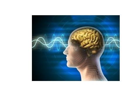 La fonction d'oubli volontaire peut s'observer dans le cerveau, précisément à travers l'activité rythmique dans l'hippocampe et le cortex préfrontal.