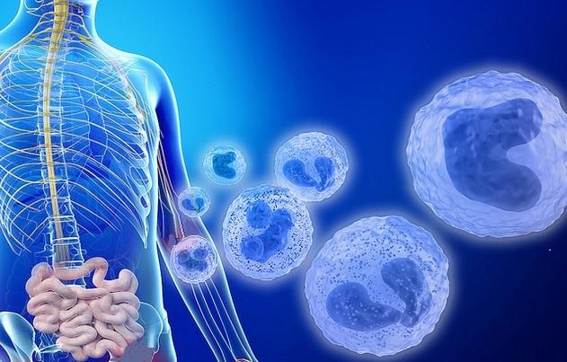 """Les """"poussées"""" de la maladie, qui peuvent entraîner une éruption cutanée, des douleurs articulaires et un dysfonctionnement rénal sévère pouvant nécessiter une dialyse suivent de près l'augmentation importante de la croissance bactérienne de R. gnavus dans l'intestin"""