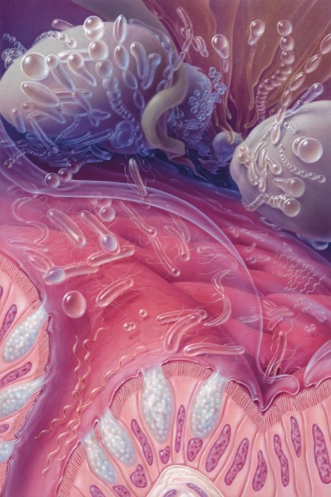La muqueuse intestinale se révèle un excellent terrain d'étude de renouvellement ou de prolifération cellulaires