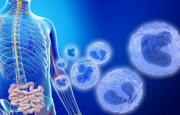 Cibler l'intestin peut être le moyen de réduire les effets secondaires cérébraux de la chimio et de réduire ces troubles cognitifs ou chemobrain