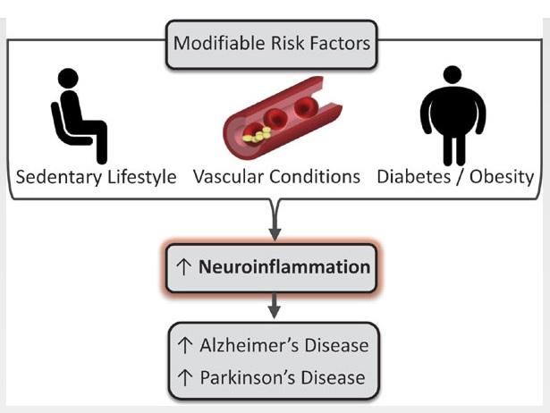 L'épidémie de maladies neurodégénératives pourrait être mieux contrôlée par la pratique généralisée, même à l'âge avancé, d'un exercice physique régulier et adapté.