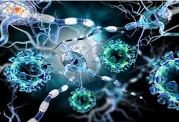 La molécule présente une forte capacité anti-inflammatoire et réparatrice et pourrait permettre de répondre très rapidement après une crise cardiaque ou une blessure cutanée, avec un effet cicatrisant au niveau de la lésion ou de la plaie et protecteur au niveau des tissus sains péri-lésionnels
