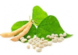 L'apport en protéines de soja (en remplacement de protéines animales) réduisent le cholestérol LDL de 3 à 4% chez l'adulte