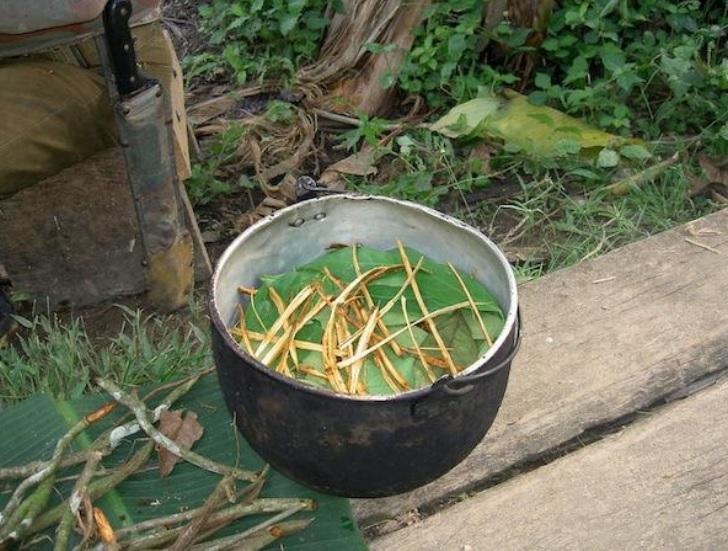 Le THÉ amazonien qui booste la neurogenèse - Préparation d'ayahuasca en Equateur (Visuel Terpsichore