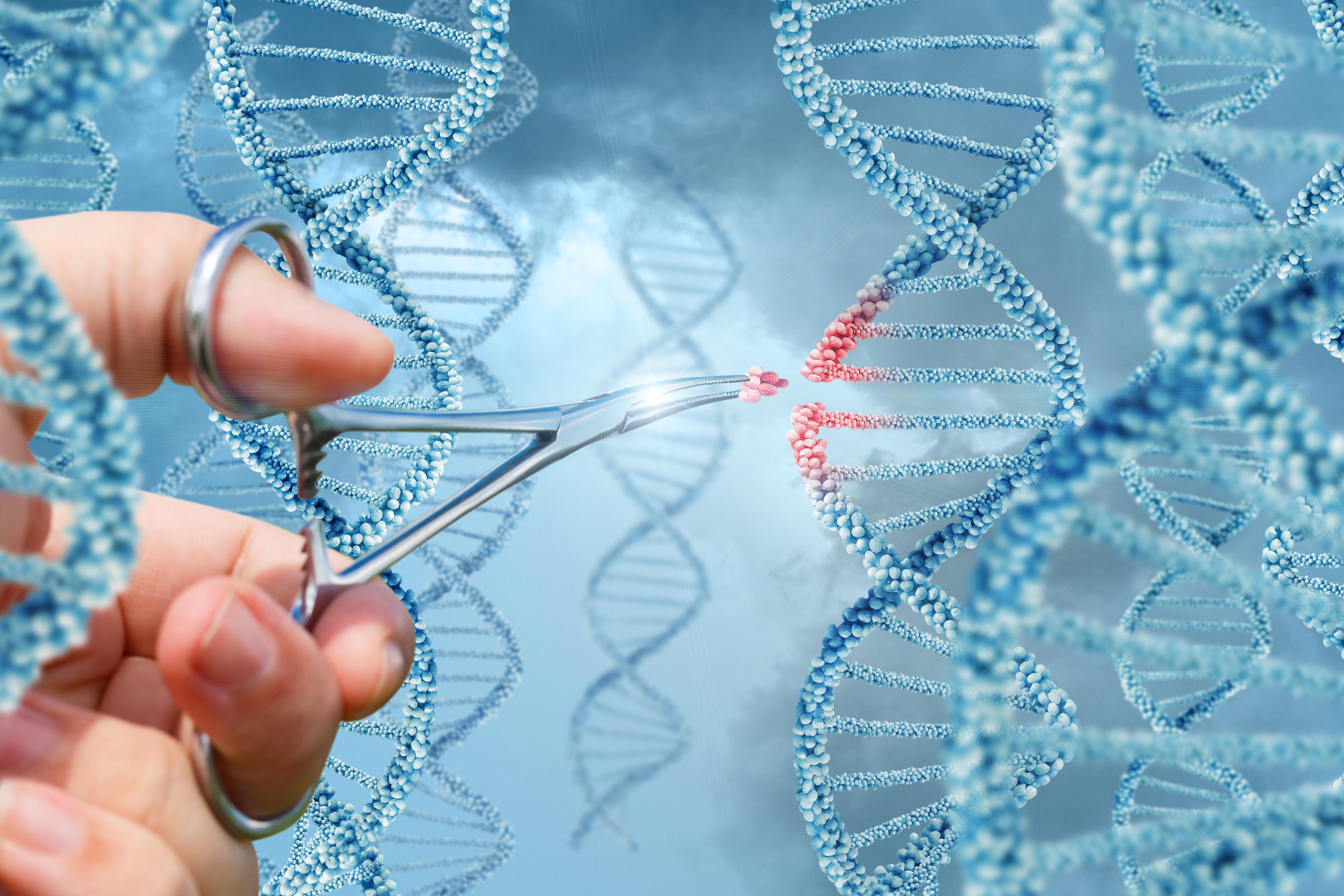 À l'aide du système d'édition du génome CRISPR / Cas9 (Visuel 2), les chercheurs ont retiré les molécules « de reconnaissance » du système immunitaire qui se trouvent à la surface des cellules souches.