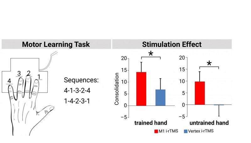 Les chercheurs ont invité leurs participants à taper une simple séquence de chiffres sur un clavier aussi rapidement et précisément que possible.
