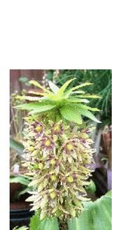 La famille des plantes Hyacinthaceae et leurs dérivés synthétiques sont donc la base au développement ou à l'extraction de composés permettant d'arrêter la croissance de nouveaux vaisseaux sanguins.