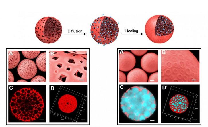Le nouveau induit ainsi une réponse efficace des lymphocytes T, une puissante inhibition des tumeurs et des effets anti-métastatiques (Visuel Pr Wei)