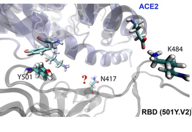 Quel avantage évolutif de la mutation K417N ? (Visuel Journal of Medicinal Chemistry)