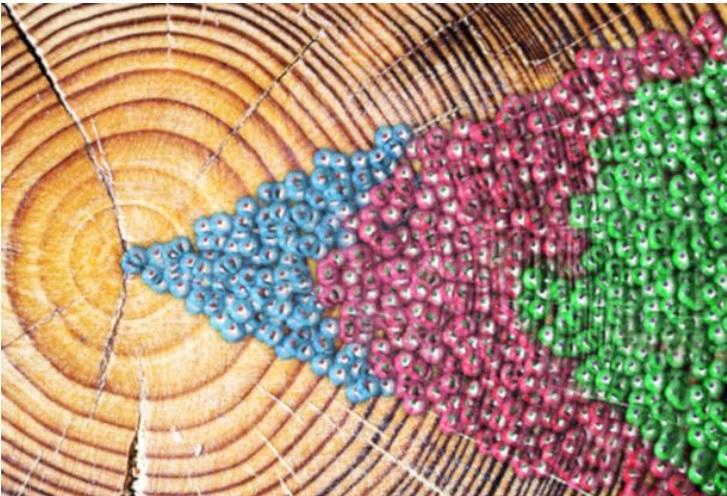 Nous avons pu cartographier les mutations ponctuelles qui surviennent tout au long du vieillissement normal pour créer une horloge moléculaire du génome humain, comparable aux anneaux d'un arbre-Illustration Spencer Phillips/EMBL-EBI