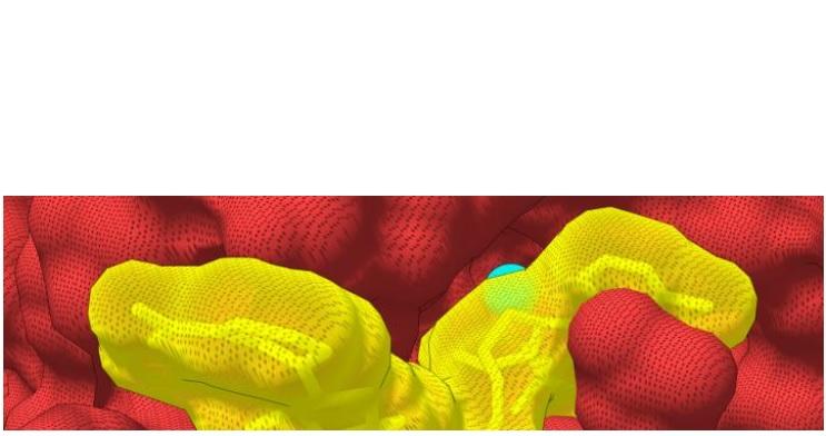 Nocturnine est la première enzyme connue à effectuer cette réaction sur le NADP + et le NADPH dans les mitochondries