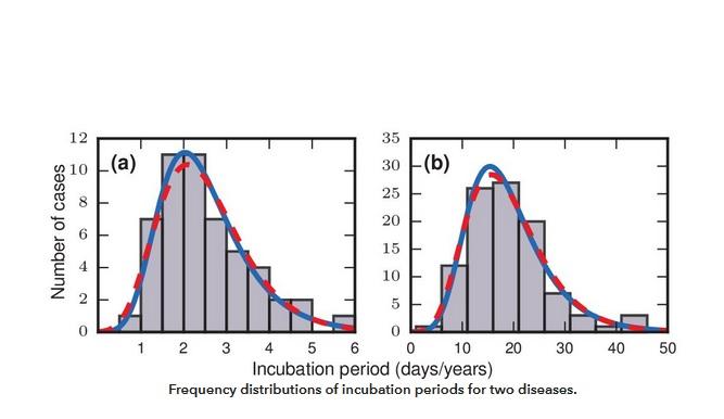 Leur modèle mathématique confirme le principe d'une distribution proche de la « lognormale »