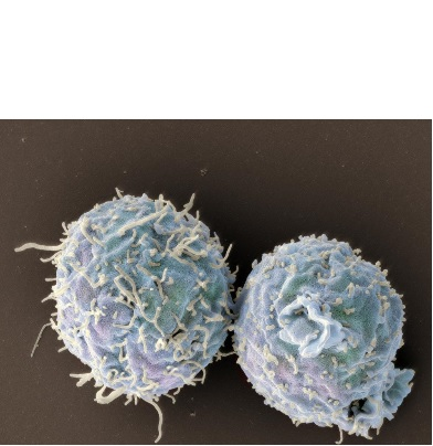 Visuel Swiss Nanoscience Institute/University of Basel, Biozentrum