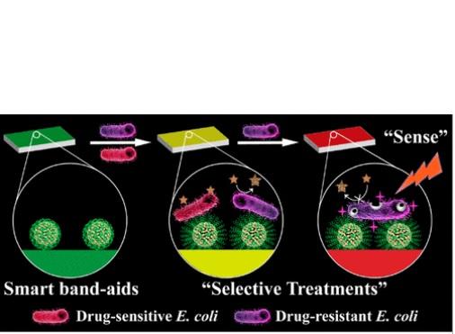 Si la plaie est infectée par des bactéries résistantes à l'antibiotique, le pansement devient rouge grâce à l'action d'une enzyme produite par les microbes résistants
