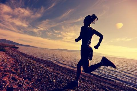 Si les muscles apportent la capacité physique de voler, ou chez les humains de se déplacer, c'est bien le cerveau qui coordonne la planification stratégique du mouvement. Mais comment ?