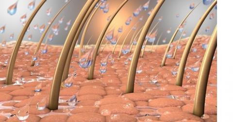 Un régime alimentaire trop riche pourrait favoriser les lésions cutanées et la perte des cheveux