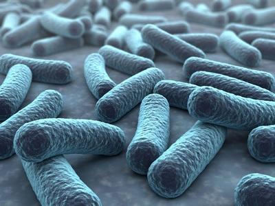 Certaines bactéries intestinales pourraient stimuler le traitement de certains cancers par immunothérapie
