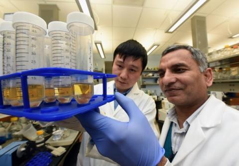 Augmenter de manière sélective la voie de l'ufmylation, pourrait, par exemple, conduire à une attaque plus ciblée du virus de la grippe