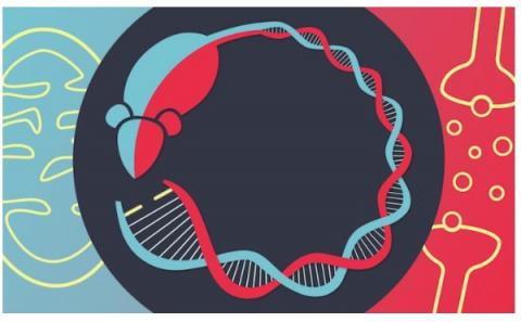 Environ 20% des patients atteints d'une maladie mitochondriale présentent également un trouble bipolaire, une maladie psychiatrique majeure caractérisée par des épisodes maniaques et dépressifs.