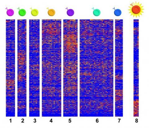 Il s'agit de la première étude à utiliser le séquençage d'ARN monocellulaire pour recueillir des données de cellules se cachant dans des tissus affectés par l'EoE.