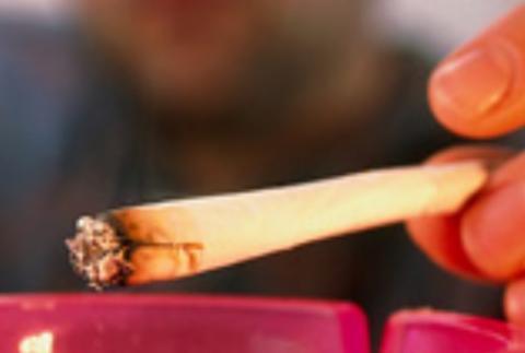 Dans cette étude, environ 20% des participants consommaient du cannabis et fumaient