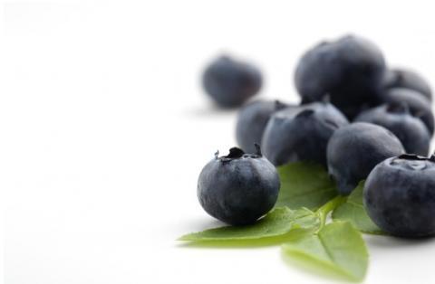 De nombreuses études ont déjà montré les effets bénéfiques, métaboliques et neuroprotecteurs de ces pigments spécifiques aux baies, dont la myrtille, le cassis et l'airelle, les anthocyanes.