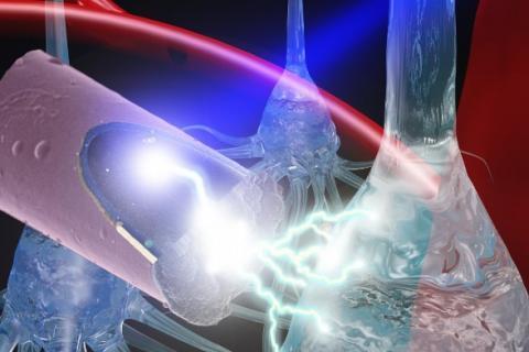 Une électrode ultralégère activée par la lumière, moins invasive, qui utilise l'effet photoélectrique pour la stimulation neurale