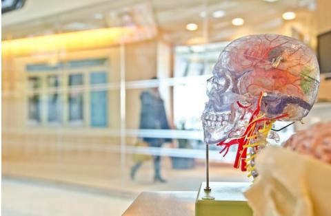 Alors qu'environ un tiers des patients épileptiques ne répondent pas bien aux médicaments antiépileptiques (épilepsie réfractaire), il existe un besoin important de nouveaux traitements.