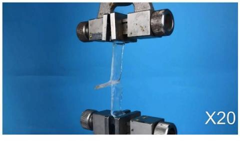 2 hydrogels, collés avec une solution aqueuse de chaînes polymères, se séparent facilement en présence de rayons ultraviolets