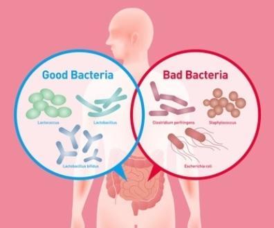 L'équilibre relatif entre les bactéries pathogènes et non pathogènes dans le microbiome intestinal est un prédicteur relativement précis du risque d'hospitalisation.