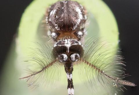 D'ici 2050, 1 milliard de personnes pourraient se trouver exposées aux maladies vectorielles telles que la dengue avec l'augmentation des températures dans le monde