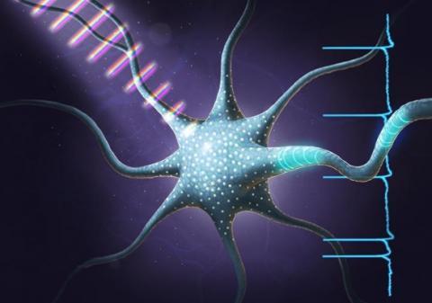 Chaque souvenir épisodique est l'oeuvre de quelques neurones de l'hippocampe