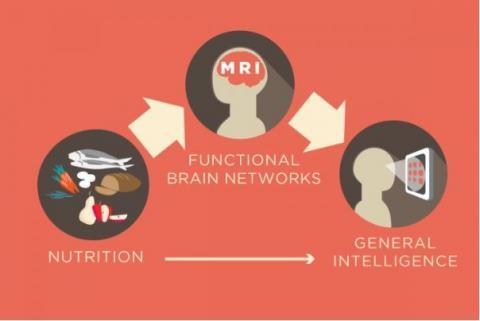 Il s'agit de mieux comprendre comment la nutrition peut influencer l'organisation fonctionnelle du cerveau humain