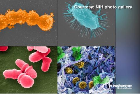 Notre tractus intestinal regorge de microbes, dont beaucoup sont bénéfiques et contribuent à notre santé globale. Cependant, dans certaines conditions, le fonctionnement normal de ces communautés microbiennes peut être perturbé.