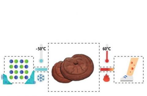 A 50° C ce sont les capacités antioxydantes et antidiabétiques qui sont optimisées (Visuel Kist).