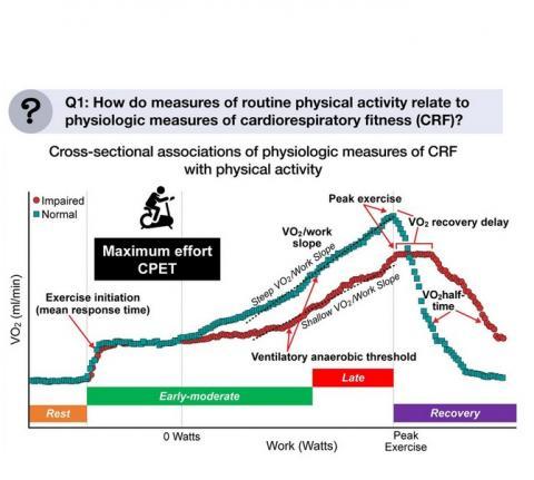 Précisément et après prise en compte des facteurs de risque cliniques, les augmentations du nombre de pas/jour et de l'activité physique modérée à vigoureuse et la réduction de la sédentarité sont toutes associées à des aspects distincts de la condition cardiorespiratoire (mesurée par la VO2) au cours de l'initiation, du niveau précoce-modéré, de l'exercice de pointe et de la récupération (Schéma European Heart Journal)