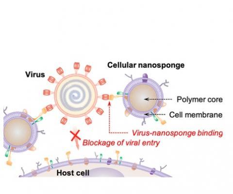Nano Letters DOI : 10.1021/acs.nanolett.0c02278