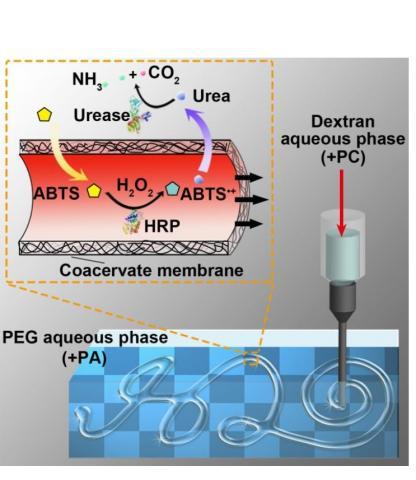 Une aiguille injecte un jet à grande vitesse de solution dextrane+eau dans la solution de PEG+eau, une technique décrite comme une « impression 3D d'eau dans l'eau »