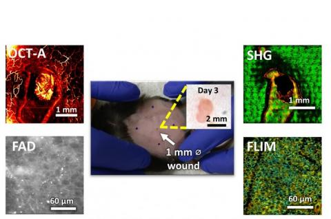 Visuel GSK Center for Optical Molecular Imaging