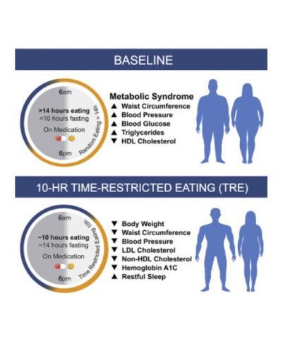 Les participants qui limitent leur alimentation à une plage de 10 heures ou moins de la journée, et cela quotidiennement sur une période de 12 semaines perdent du poids : en moyenne 3% de leur poids corporel ;