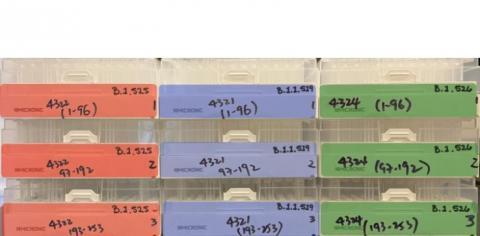 L'analyse a porté sur 3 groupes différents de participants, des personnes rétablies du COVID-19, des personnes vaccinées avec les vaccins Moderna ou Pfizer-BioNTech et des personnes jamais exposées au SRAS-CoV-2 (Visuel La Jolla Institute for Immunology)