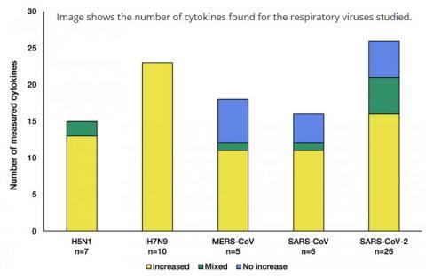 Ce schéma montre le nombre de cytokines trouvées pour les virus respiratoires étudiés (schéma Earlham Institute)