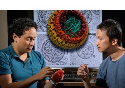 Ces chercheurs de l'Université du Delaware et de de l'Université Cornell révèlent de nouveaux détails sur la structure de la capside du virus VIH et sur son évolution
