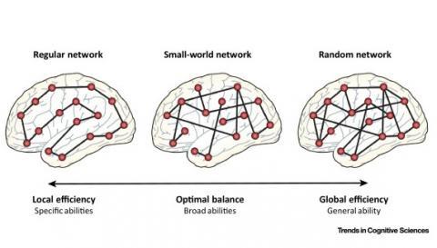 Réseau frontopariétal, réseau de saillance et réseau par défaut .