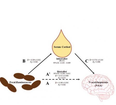 NEURO : Quand le microbiote communique avec le cerveau via