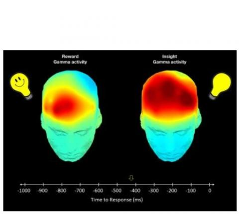 Lors des moments de créativité, l'imagerie montre un sursaut d'ondes cérébrales « gamma » chez tous les participants puis une seconde vague d'ondes gamma environ un dixième de seconde plus tard dans le cortex orbitofrontal, une partie du système de récompense du cerveau, mais uniquement chez les participants sensibles à la récompense.