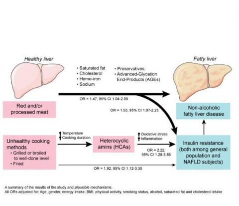 une consommation élevée de viande rouge et transformée indépendamment associée à la stéatose hépatique non alcoolique et à la résistance à l'insuline