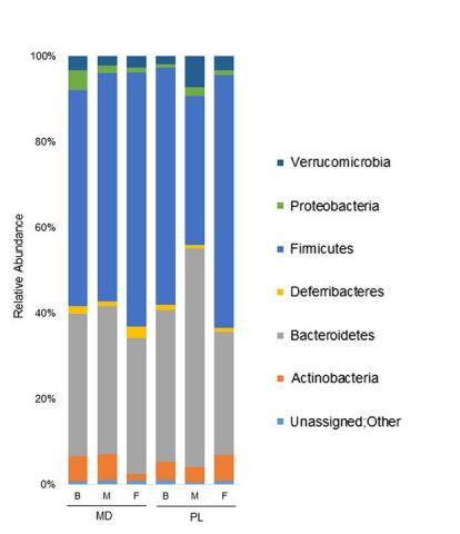 l'équipe constate que le composé polylysine (PL sur visuel) perturbe temporairement la diversité du microbiote intestinal